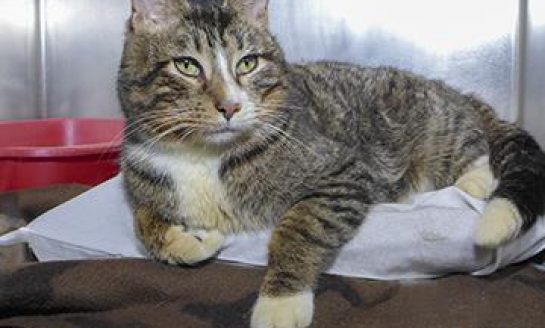 CCHS Pet of the Week: FIV Positive Cats