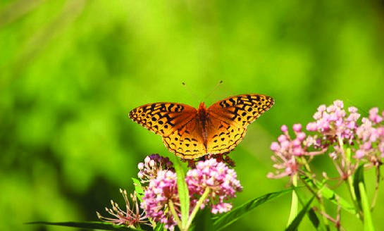 Audubon Little Explorers Learn about Butterflies and Moths on Saturday, July 14